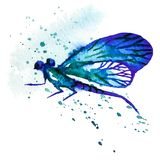 Blue Watercolor Dragonfly Royalty Free Stock Image