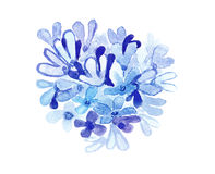 Blue watercolor flowers. Royalty Free Stock Image