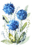 Blue watercolor flowers. Color illustration of blue flowers in watercolor painting. Can be used as greeting card, invitation card for wedding, birthday and other Royalty Free Illustration