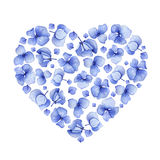 Blue watercolor hydrangea floral heart design. Stock Image