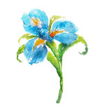Blue watercolor iris flower Stock Image
