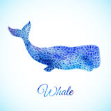 Blue Watercolor whale illustration. Watercolor whale decorative Illustration made of blue flower ornament Royalty Free Stock Image