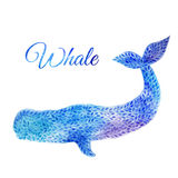Blue Watercolor whale illustration. Blue Whale Illustration. Watercolor whale. illustration of watercolor whale, made of blue flower ornament Royalty Free Stock Photography