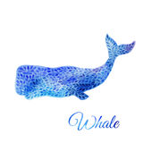 Blue Watercolor whale illustration. Blue Whale Illustration. Watercolor whale. illustration of watercolor whale, made of blue flower ornament Stock Images