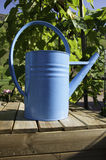 Blue Watering can. In a garden Stock Images