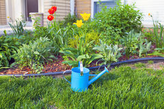 Blue Watering Can Stock Photos