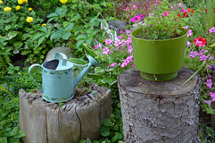 Blue watering can in garden Royalty Free Stock Images