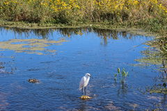 Blue waters. Scenic picture with a egret in the forefront Stock Images