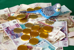 Blue wavy parrot and money on green background. Royalty Free Stock Image