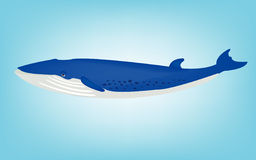 Blue whale. Illustration of the big blue whale Stock Photos