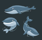 Blue Whale. Aquatic Mammal set,  illustration cartoon Stock Photography