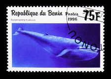 Blue Whale (Balaenoptera musculus), Sea Mammals serie, circa 199. MOSCOW, RUSSIA - MARCH 18, 2018: A stamp printed in Benin shows Blue Whale (Balaenoptera stock photos