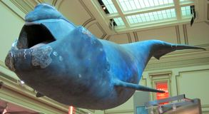 Blue Whale. A big blue whale statue stock photos
