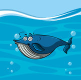 Blue whale with dizzy face in the sea Stock Image
