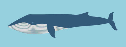 Blue Whale. Illustration on white background. Vector Stock Image