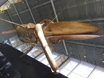 Blue Whale Skeleton, UBC Campus , Vancouver, British Columbia, Canada. The University of British Columbia has many treasures among which this amazing hanging stock photography