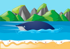 Blue whale swimming in ocean Stock Images