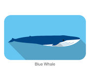 Blue whale swimming in the sea flat icon design Stock Image
