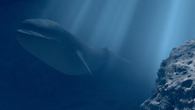 Blue whale in undersea. 3d illustration Stock Photography