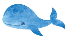 Blue whale. Watercolor cartoon hand drawing  paint Royalty Free Stock Photo