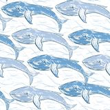 Blue whales with chaotic lines of waves hand-drawn vector seamle. Cachalot with chaotic lines of waves hand-drawn vector seamless background pattern Stock Photos