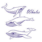 Blue whales sketch Doodle Vector Stock Images