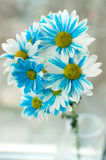 Blue and white aster flowers in a glass vase. Royalty Free Stock Images