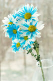 Blue and white aster flowers in a glass vase. Royalty Free Stock Photography