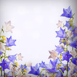 Blue and white bellflowers background Stock Photography