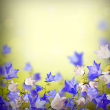 Blue and white bellflowers background_3 Royalty Free Stock Photos