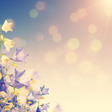 Blue and white bellflowers background_vintage Stock Image
