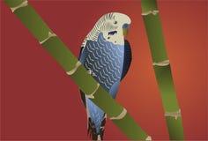 Blue And White Budgie. Bird stock illustration