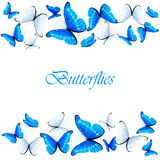 Blue and white butterflies Royalty Free Stock Photos