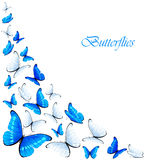 Blue and white butterflies Stock Photography