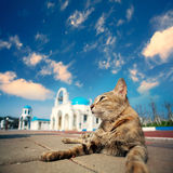 Blue and White Church bell with cat Stock Photography