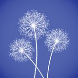 Blue and white dandelion Stock Image