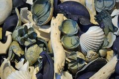 Blue and white decorations shells and wood. Blue and white decorations shells wood flowers smels like marine and sea and ocean stock photography