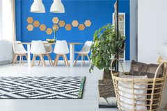 Blue and white dining room. Basket with cushions and patterned carpet in spacious blue dining room interior with white chairs at wooden table Stock Images