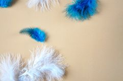Blue and White Feathers on Pastel Background. Blue and white feathers on background with space for text royalty free stock photo