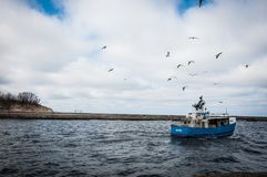 Blue and White Fishing Board Under Black Birds Stock Image