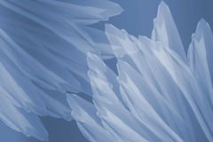 Blue and White Flower Petals. Pastel blue and white flower petals on white background Royalty Free Illustration
