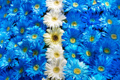 Blue and white flowers decoration Stock Images