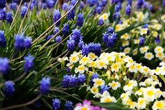 Blue and white flowers growing near the water stock photography