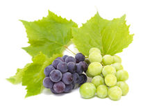 Blue and white grape clusters Stock Image