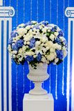 Blue and white and green flowers in ceramic pot Royalty Free Stock Photography