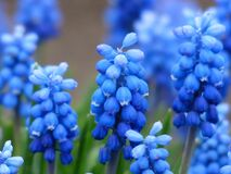 Blue and White Petaled Flower Royalty Free Stock Photography