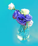 Blue and white roses in glass vase on blue background Royalty Free Stock Photo