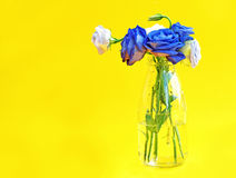 Blue and white roses in glass vase on yellow background Royalty Free Stock Photography