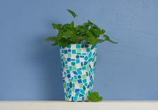 Blue and white still-life with mint in mosaic vase Stock Photos
