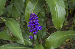 Blue wild flower Stock Photo